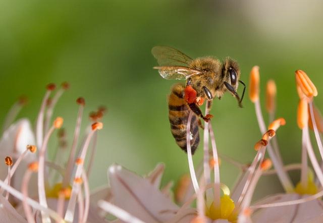 Daily Haiku: Bees