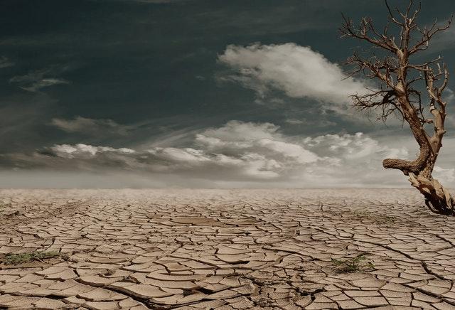 Daily Haiku: Dry