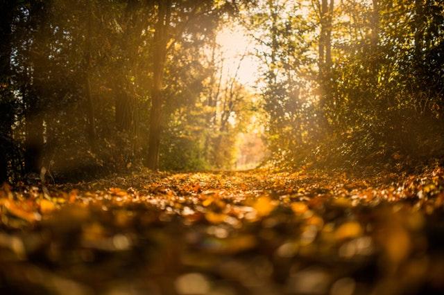 Haiku: Seasons