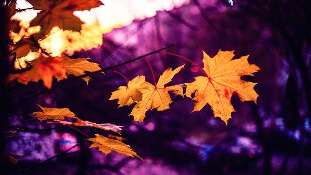 Daily Haiku: Leaf